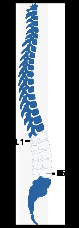 spine L1-L5