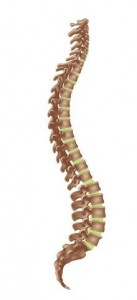 Spinal col
